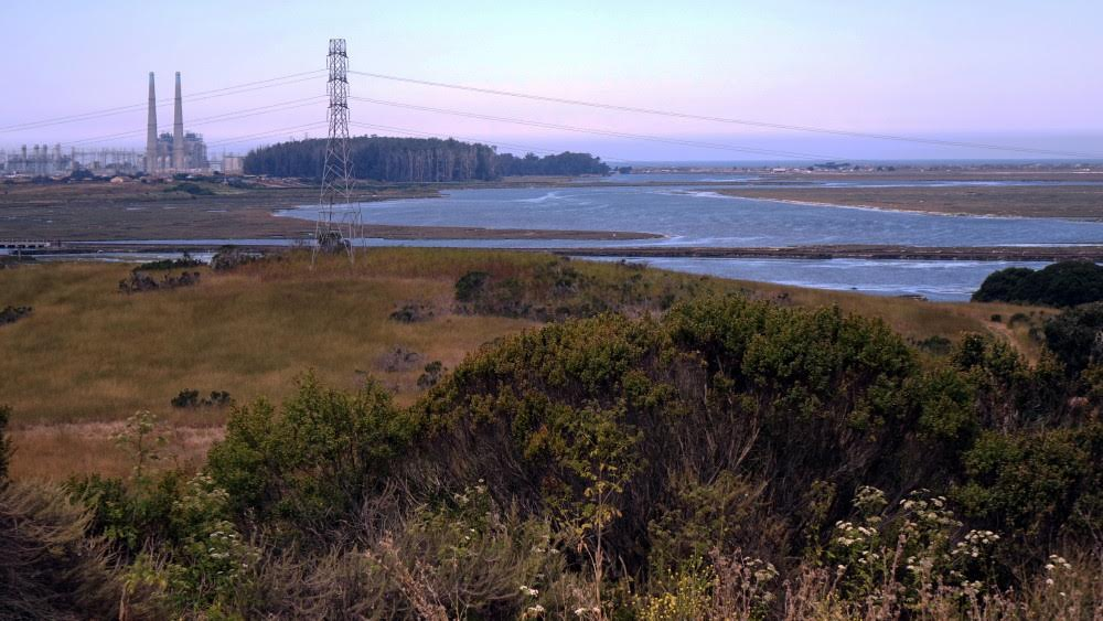 Look for our second Elkhorn Slough Day Hike on August 20th.
