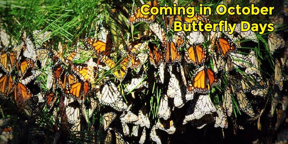 ButterflyDaysBanner-1.jpg