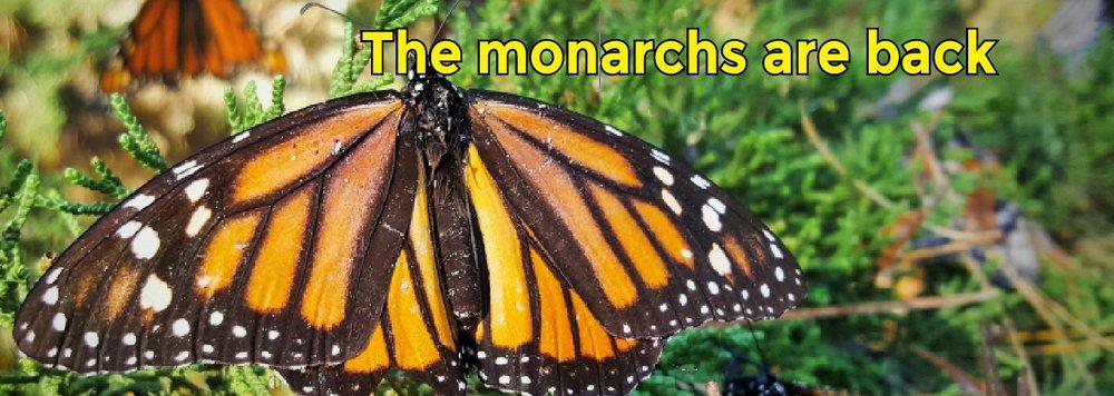 MonBanner-1.jpg