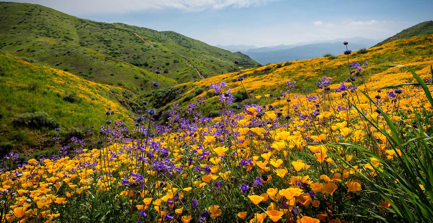 wildflower month pacific grove museum of natural history