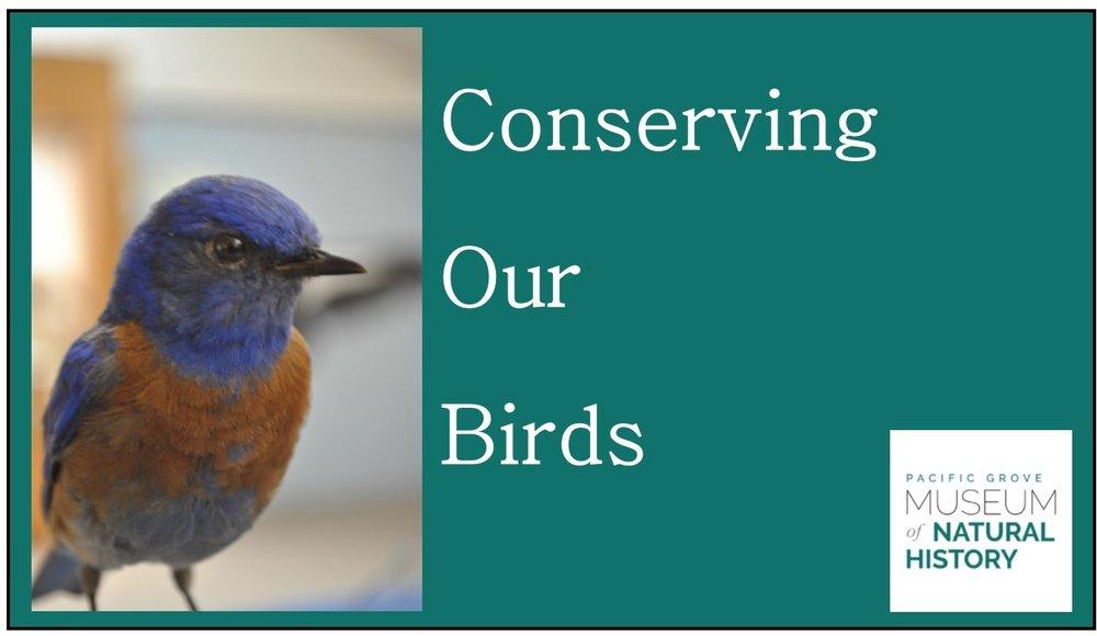 new bird email image.jpg