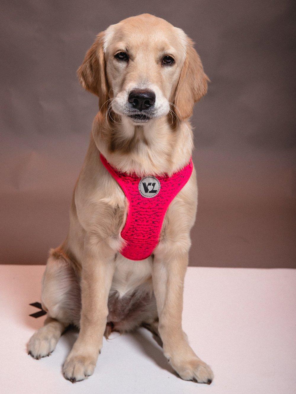 Sophie - Creative Motivator & Dog