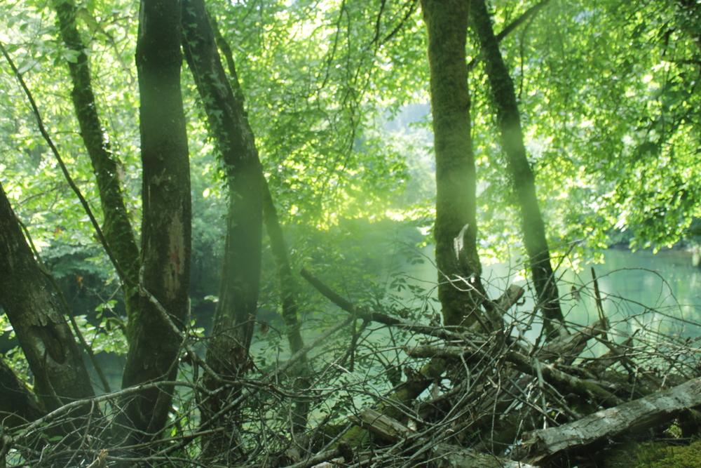 Lush, green Galicia