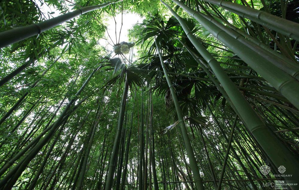 TITAN_bambooSpider2_CK_01.jpg