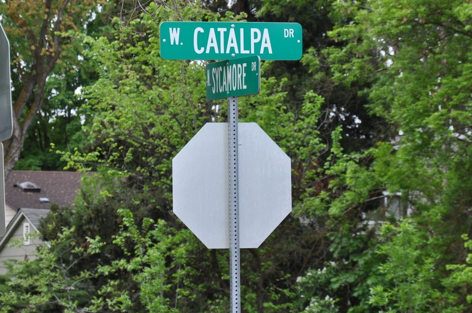 Catalpa Drive, the street on which Collister Elementary is located, where the group met