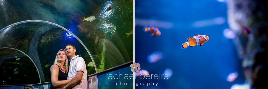 southend-aquarium-engagement_0014.jpg