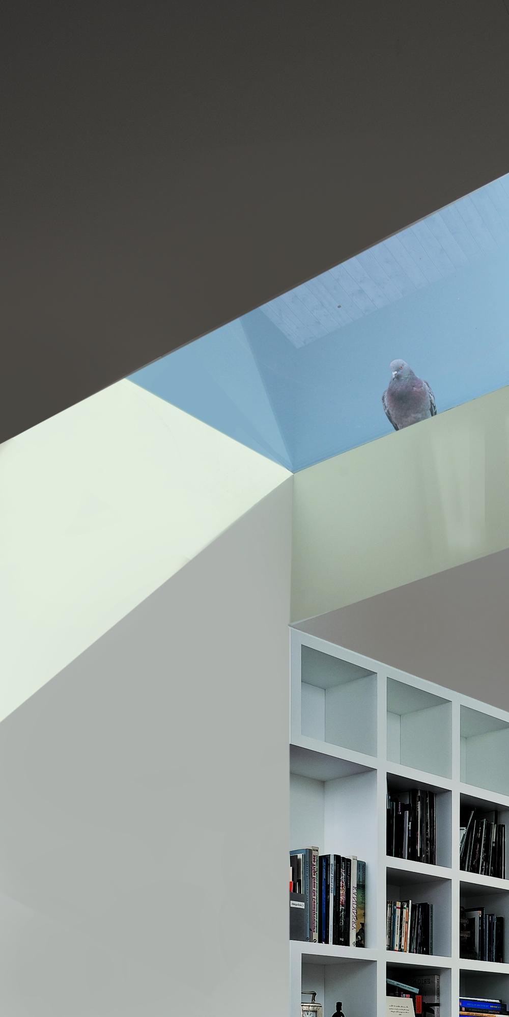 WTAD_rooflight with pigeon.jpg