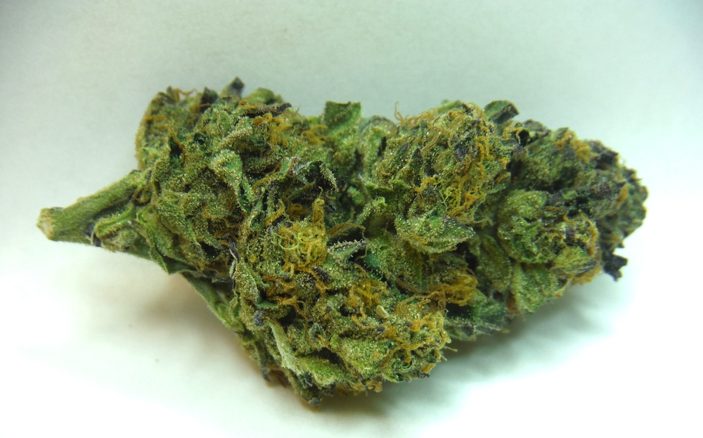 Girl Scout Cookies | Green House | Dr. Jolly's