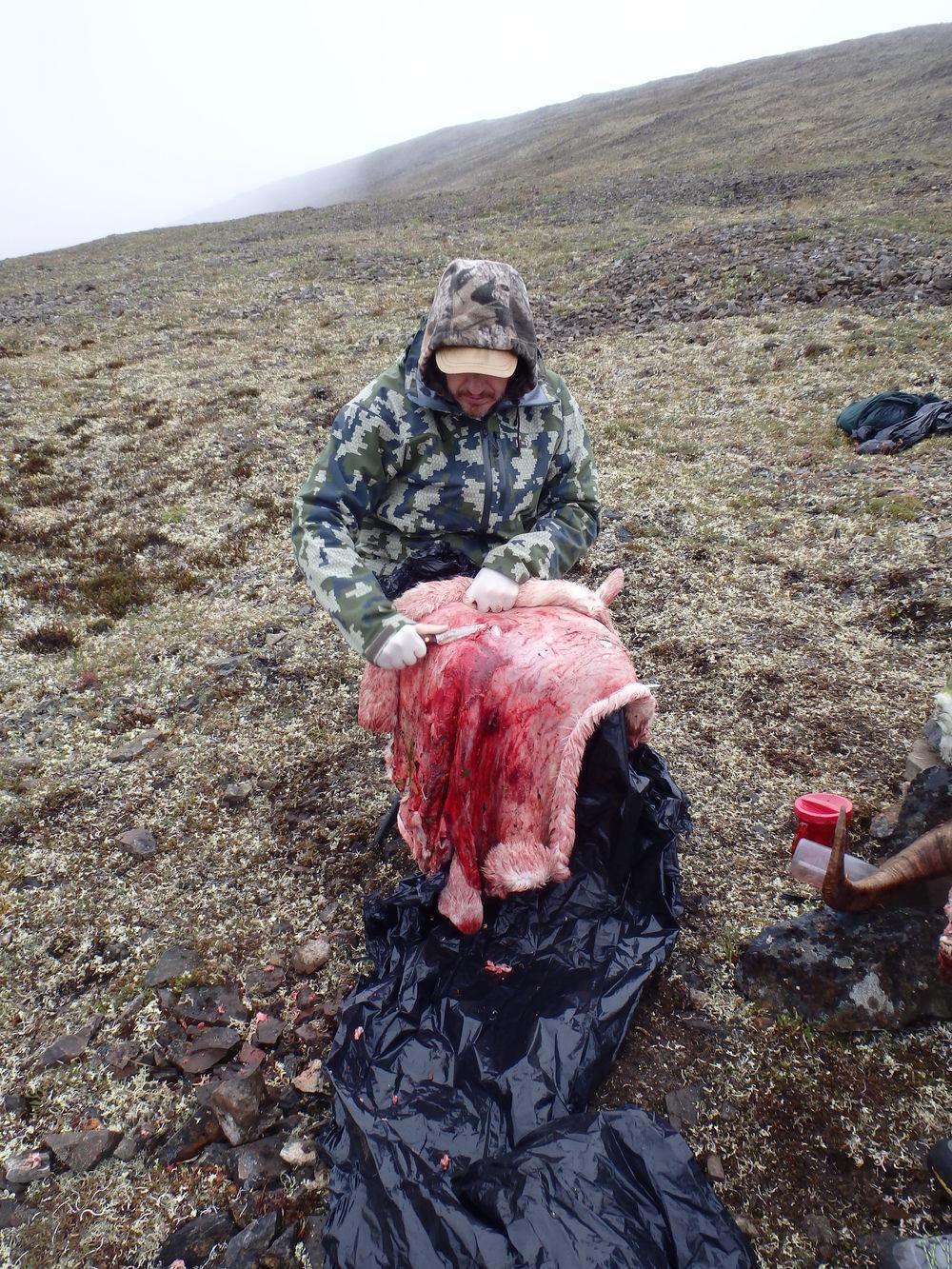 Проводник выскабливает шкуру барана