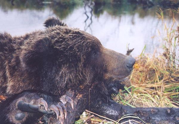 2003-bear1.jpg