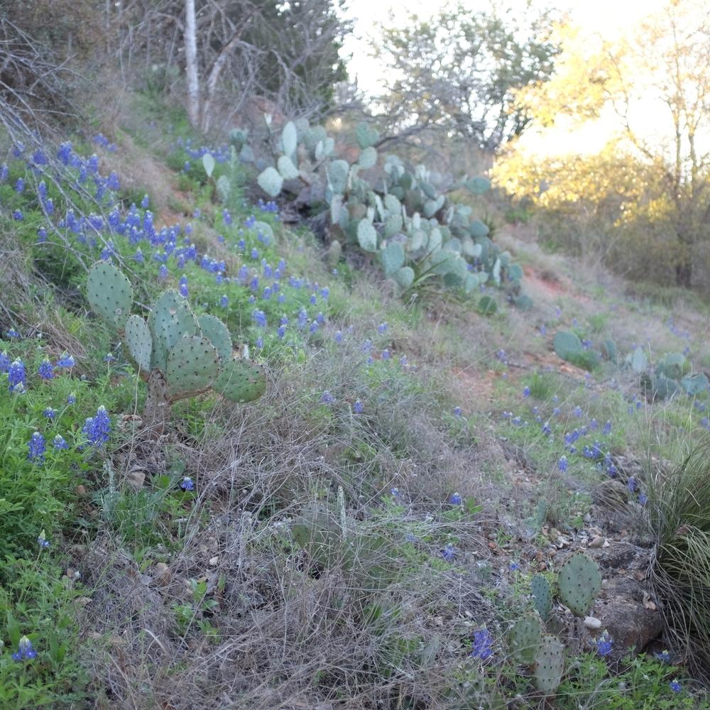 LBJ Park Nature Trail