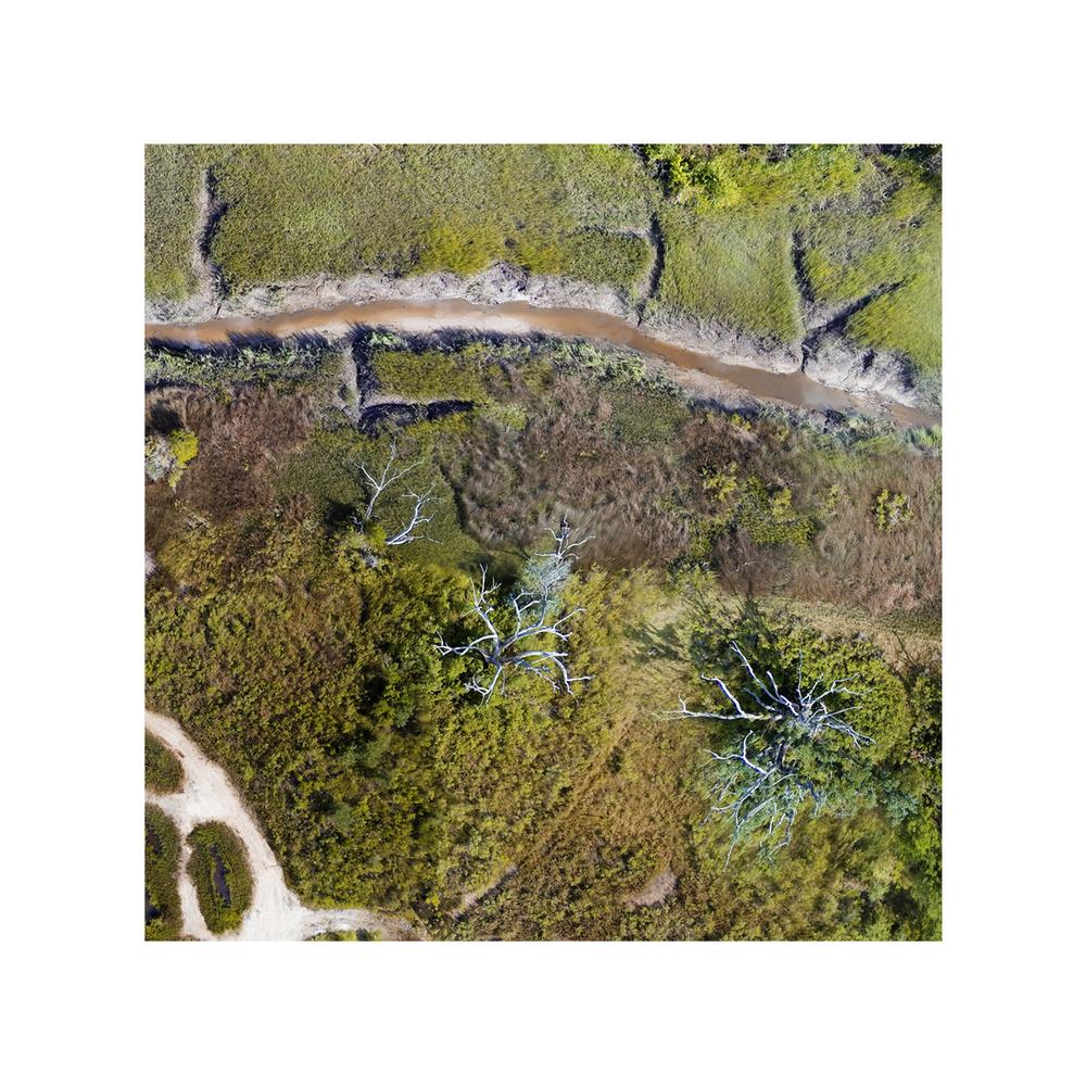 Savannah Marshland Trail (detail)