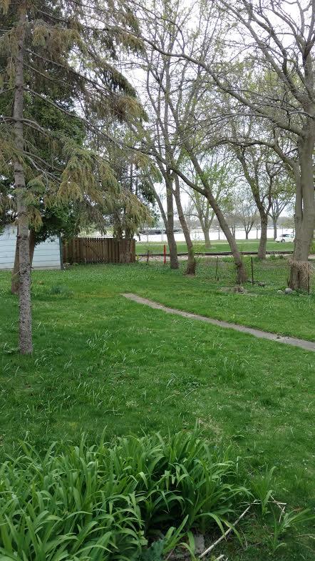 back yard2.jpg