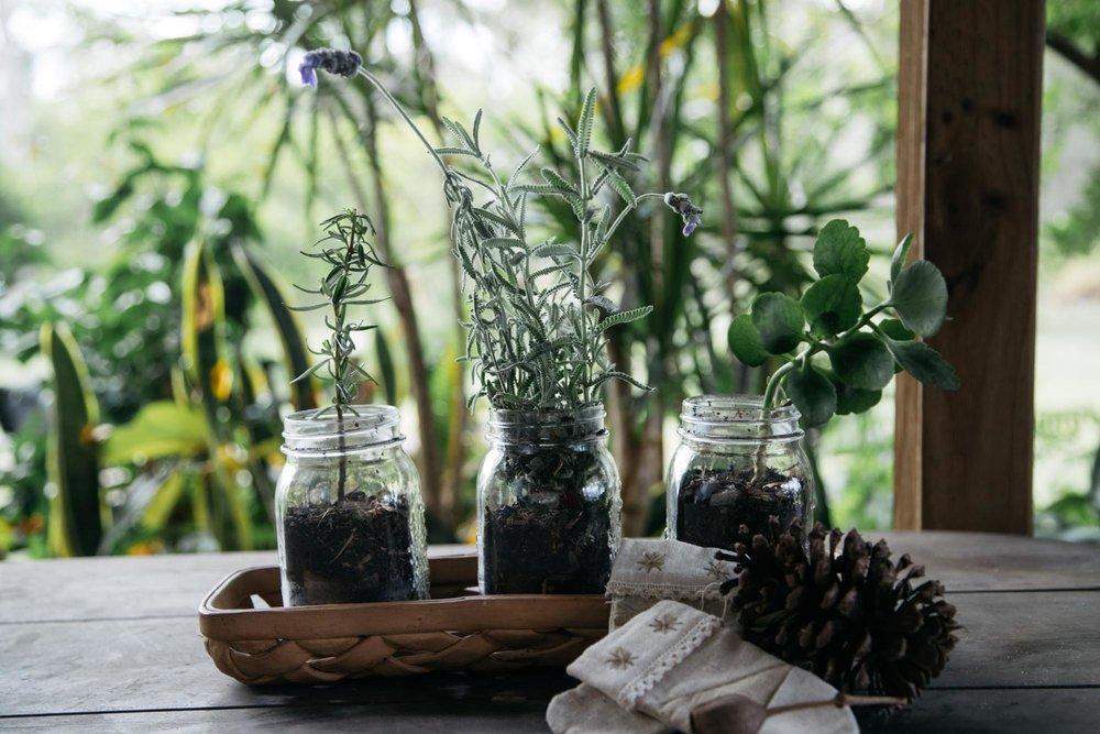 mini herb garden.jpg