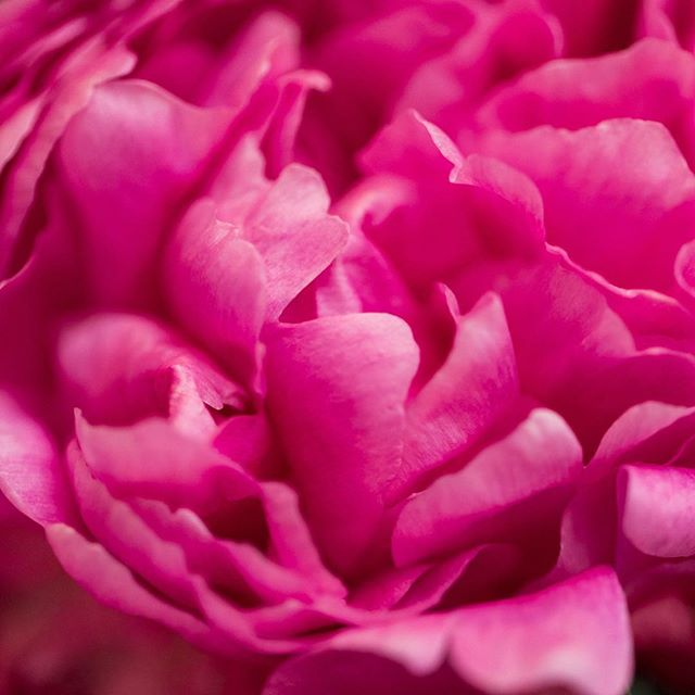 Got up close and personal with stunning floral design by @valjurado I could live inside this peony.⠀