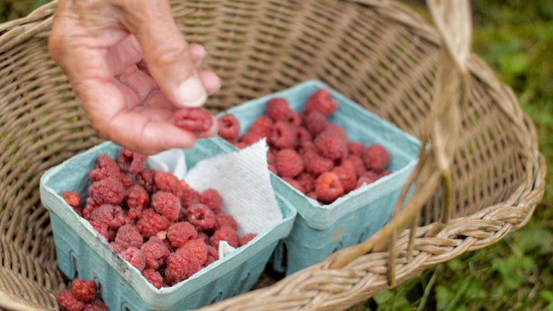 emily rasberries.jpg
