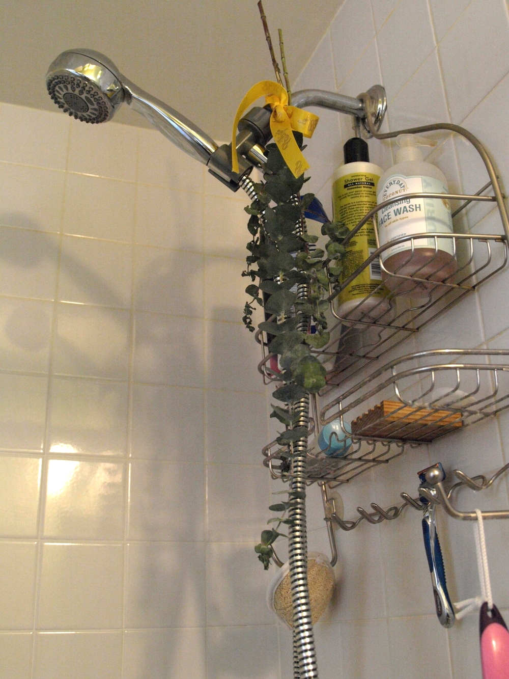 A steamy shower + fresh eucalyptus leaves = sweet relief & healthy breathing!