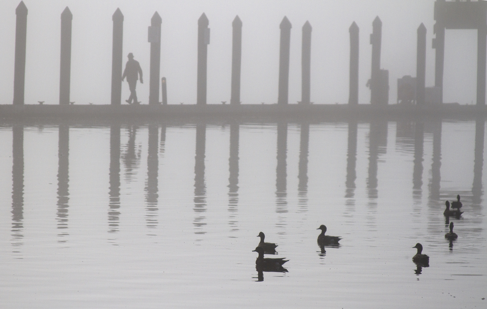 A paddling of ducks, and one lone human traveler, venture out into the late morning fog at the downtown Winslow pier on Bainbridge Island.