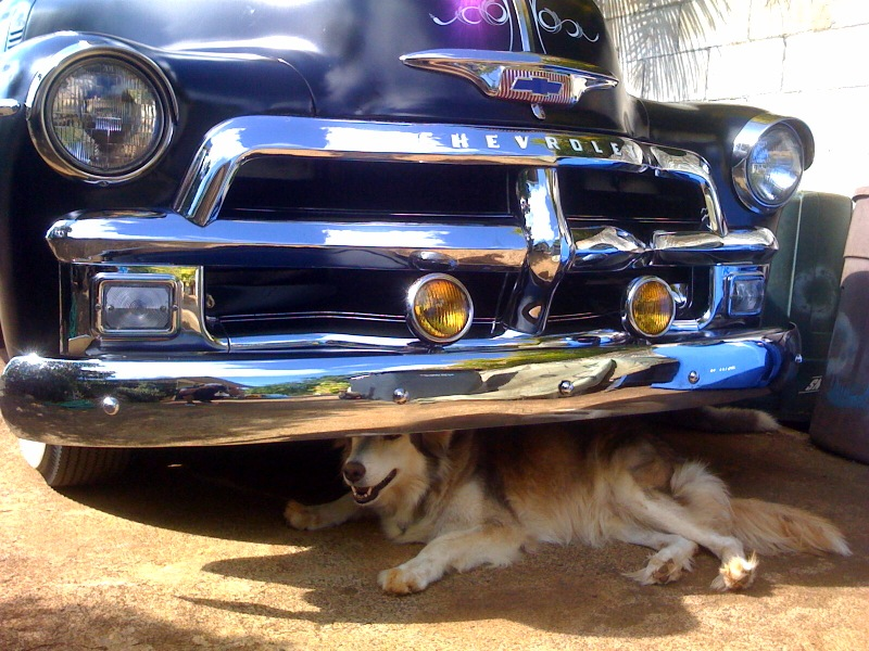 ui dog under chevy.jpg