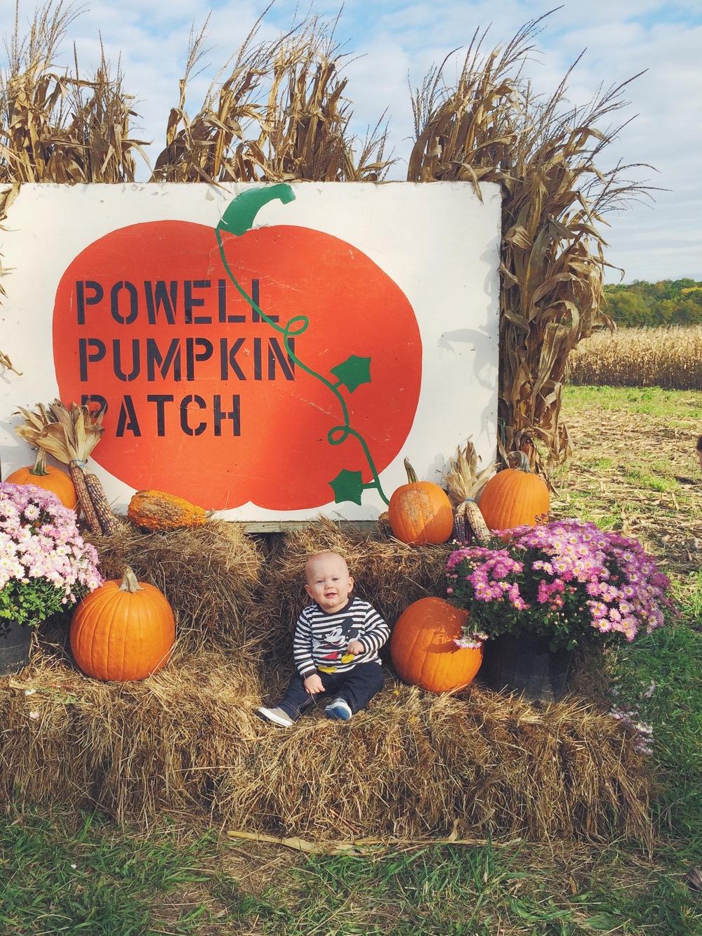 MyOnlySunshineBlog_PowellPumpkinPatch