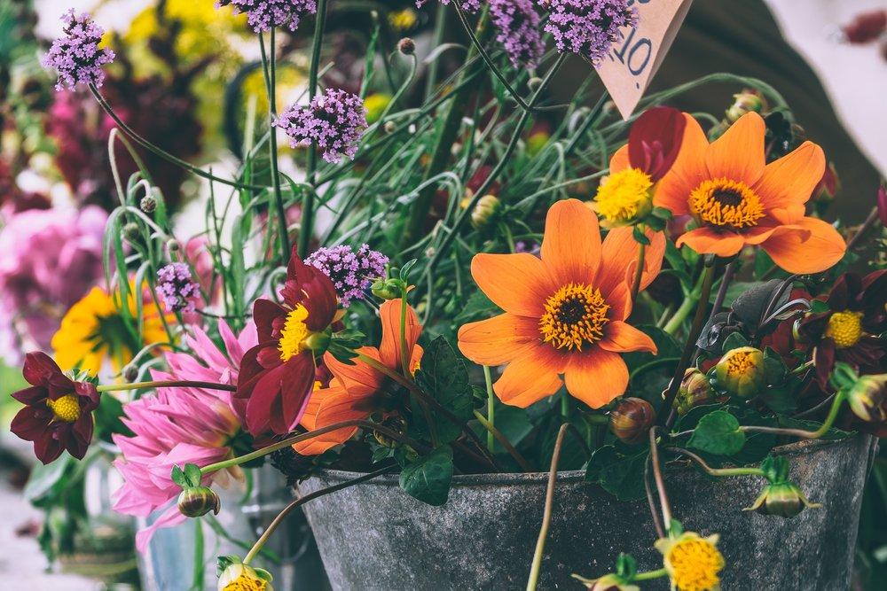colorful blooms.jpg
