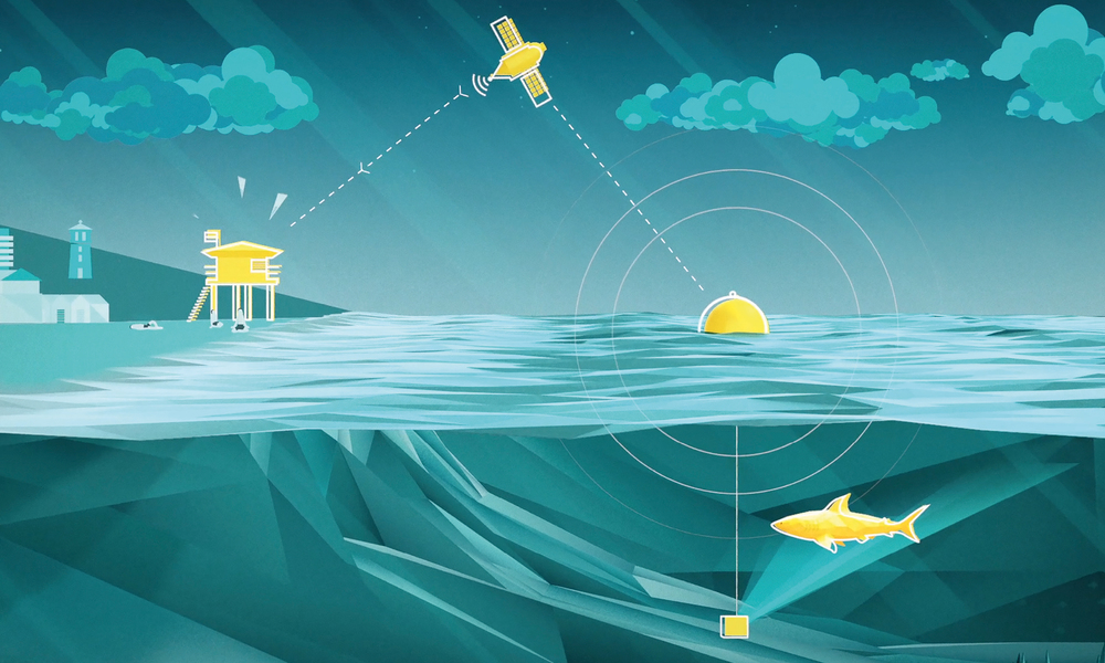 Real Time Data Journey. -  Shark > Sonar Head > Clever Buoy > Satellite > Lifeguard Tower.