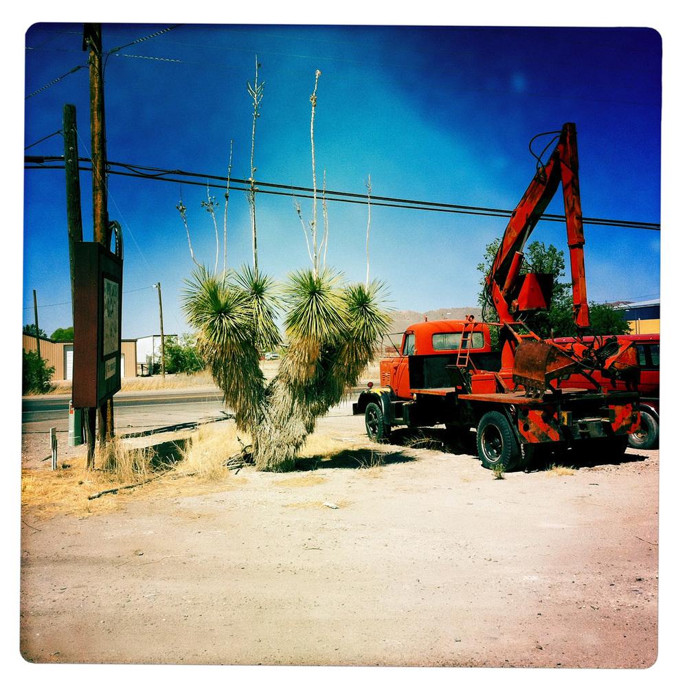 Yucca along the outskirts of Willcox AZ Arizona