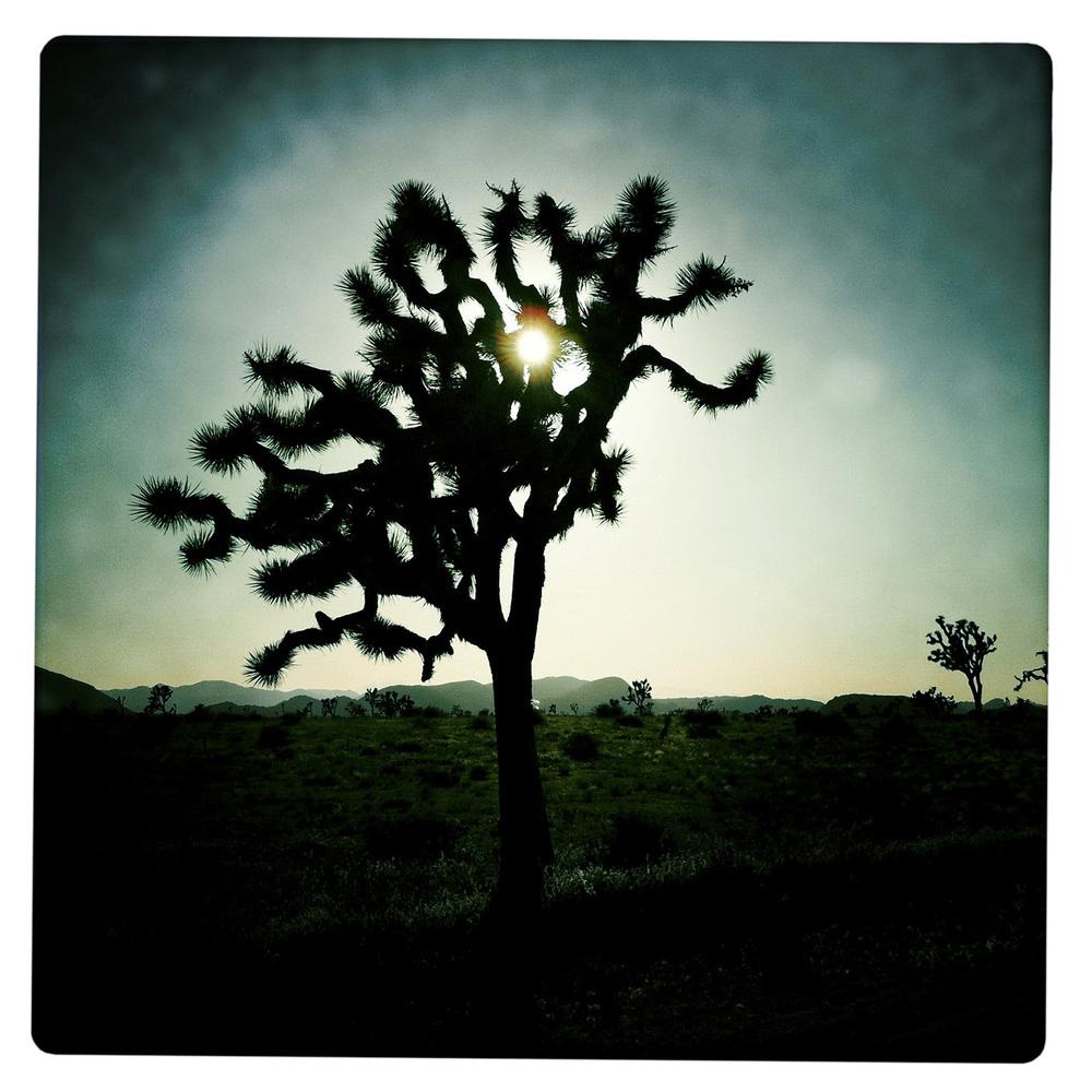 Joshua Tree at Dusk near Twentynine Palms CA California