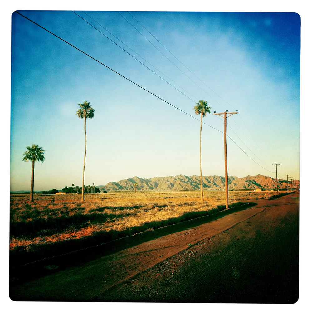 Palms along Road in Yuma AZ Arizona