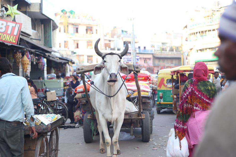 Coming Through - New Delhi, India