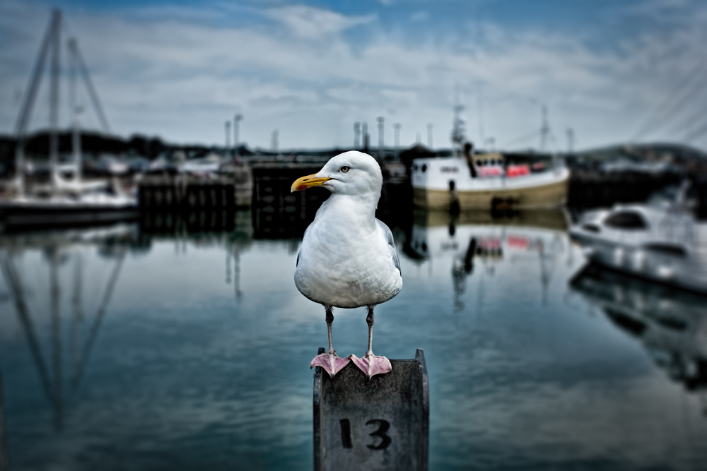 Bird on guard, Padstow, by Rick McEvoy Cornwall Photographer