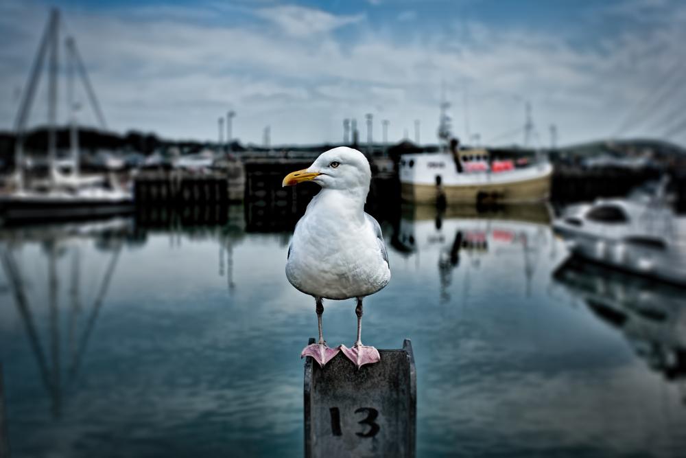 CORNWALL-PHOTOGRAPHER-RICK-MCEVOY-003-07072013.jpg