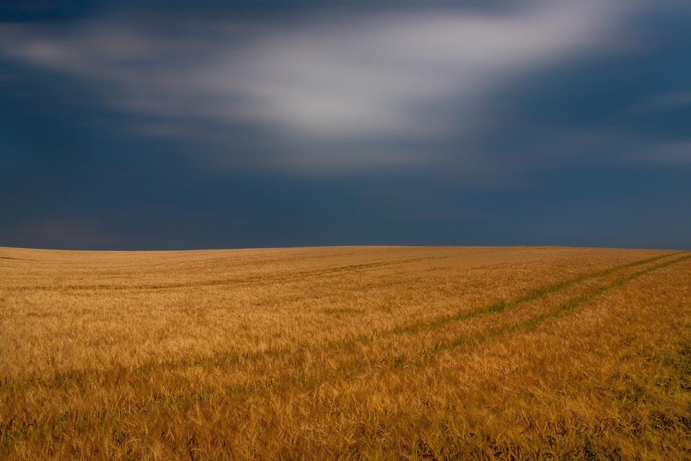 Field, Dorset, by landsacpe photograher Rick McEvoy