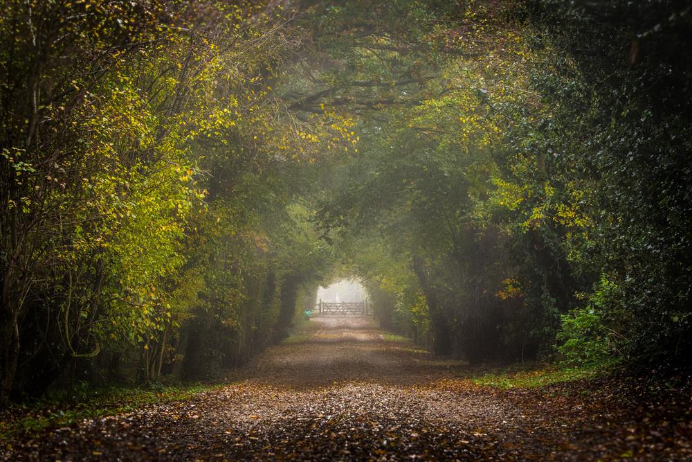 Misty track, Dorset