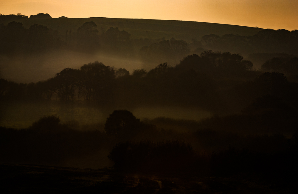 Moody, morning mist in Dorset