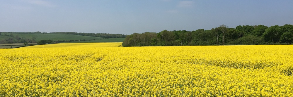 Yellow field by Hampshire Photographer Rick McEvoy