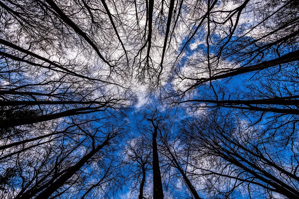 Blue sky through trees in the New Forest, by Rick McEvoy Hampshire Photographer