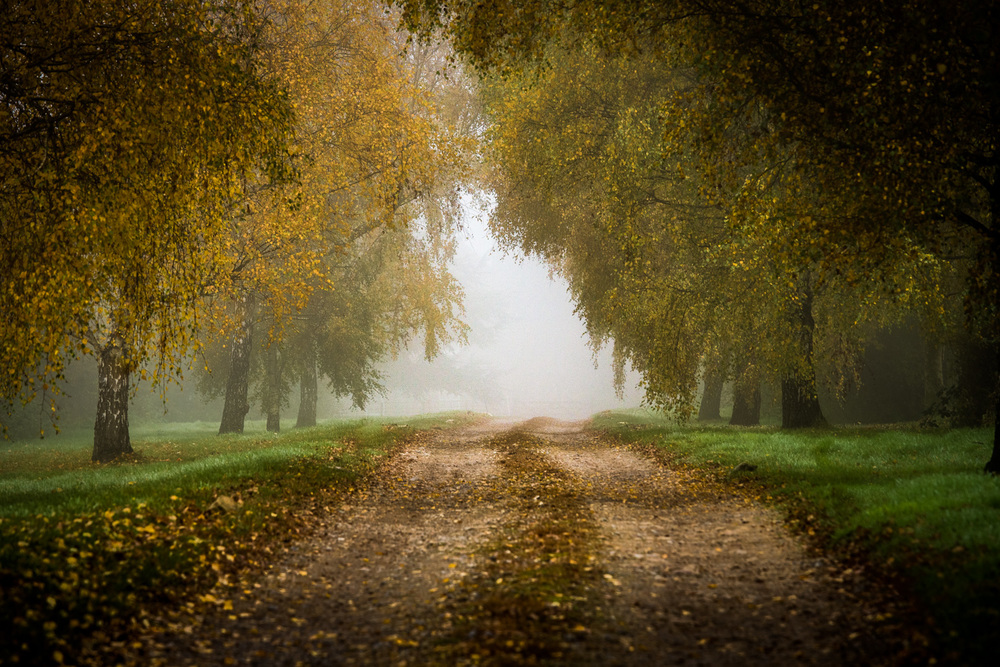 Misty Leafy Track – a lovely composition and feel to this shot