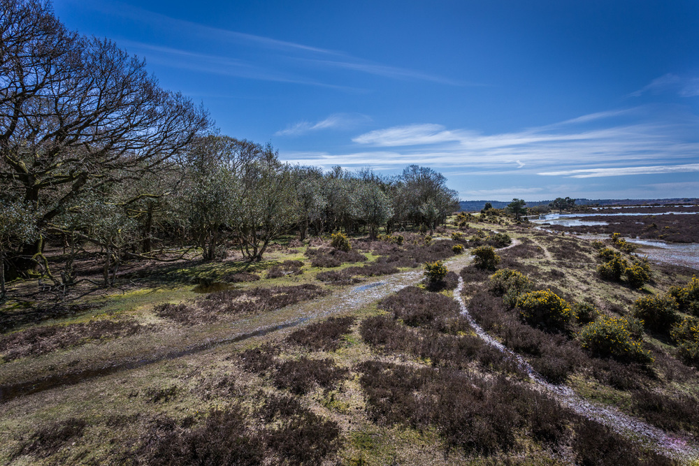 The New Forest – this is what it looks like all over the place!!