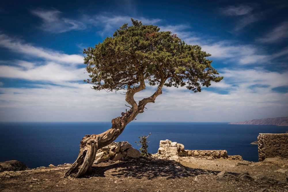 Picture of a tree, Monolithos Castle, Rhodes, Greece, by Rick McEvoy landscape photographer