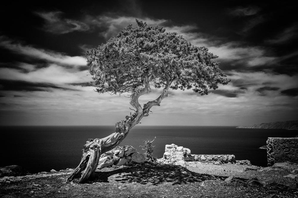 Tree. Monolithos. Rhodes. Greece.