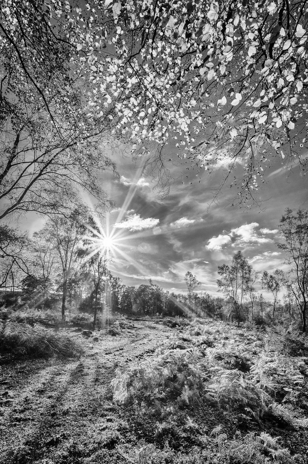 The stunning New Forest - new landscape photography in Hampshire by Rick McEvoy
