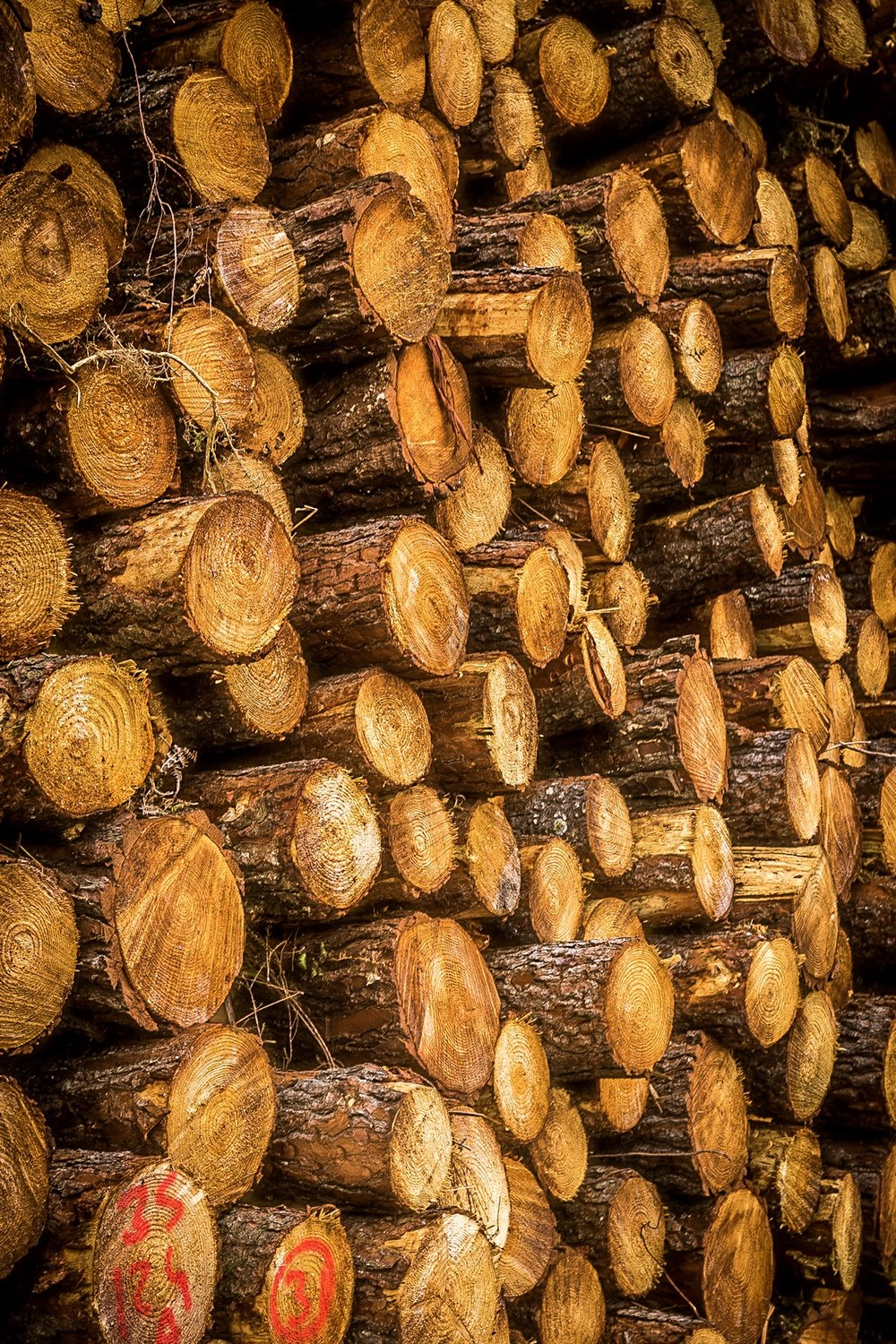 Picture of a stack of logs