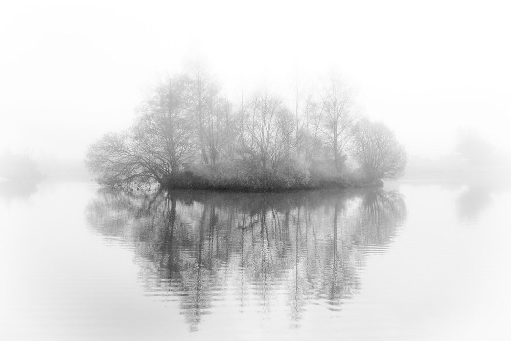 The New Forest in dreamy black and white