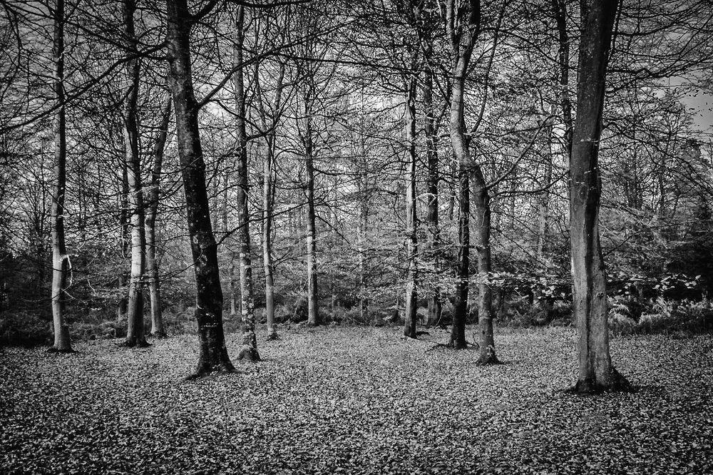 Black and white picture of the New Forest by Rick McEvoy Hampshire Photographer