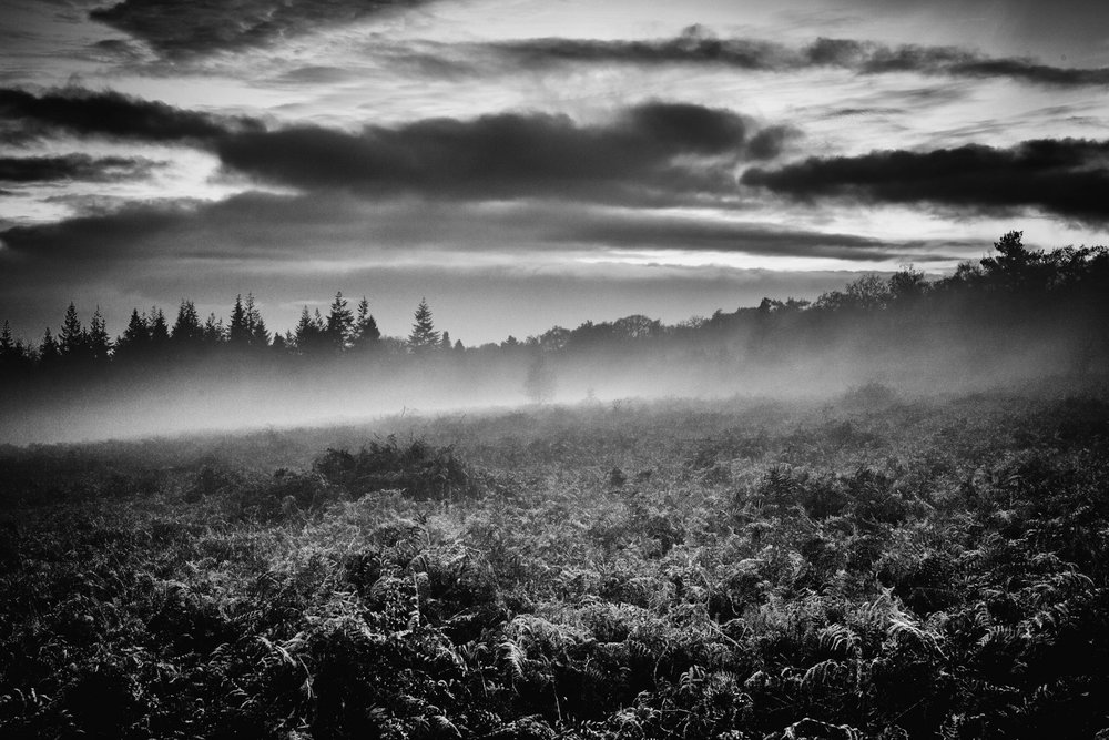 My black and white picture of New Forest sunset mist