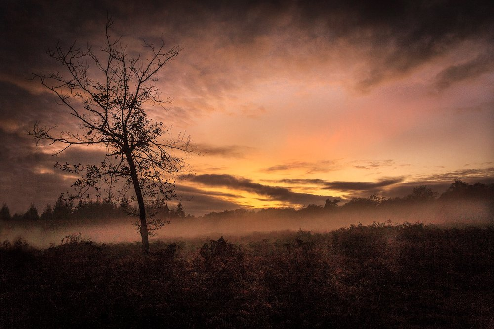 Picture of a misty sunset in the New Forest by Rick McEvoy Hampshire Photographer