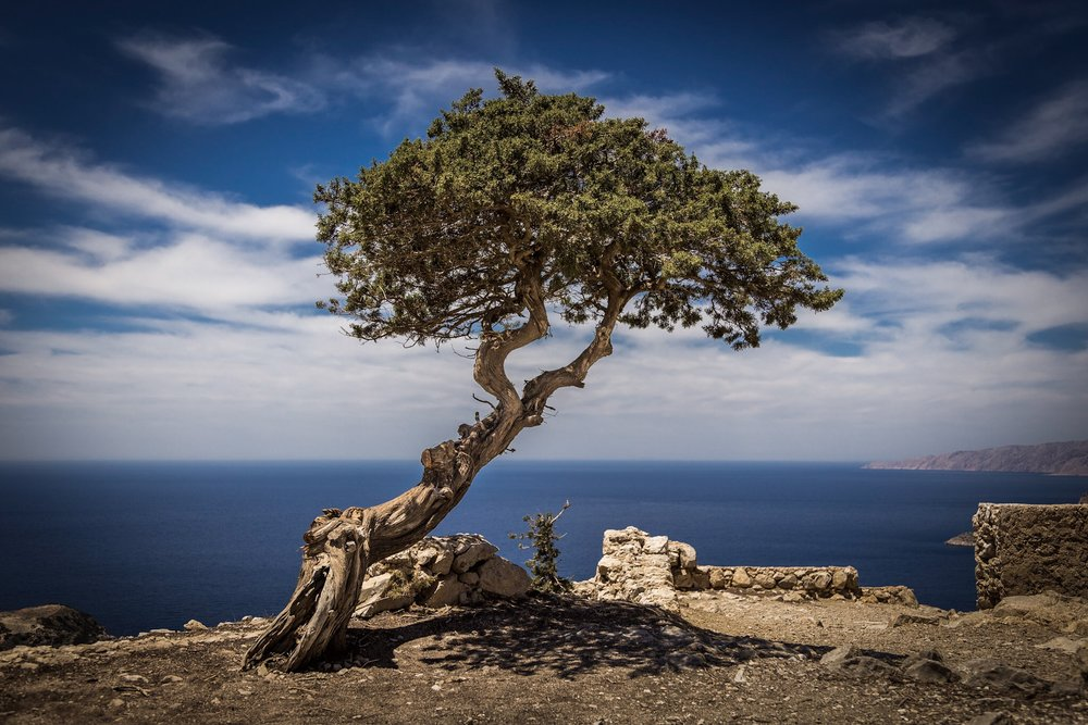 Tree by Rick McEvoy Landscape Photographer