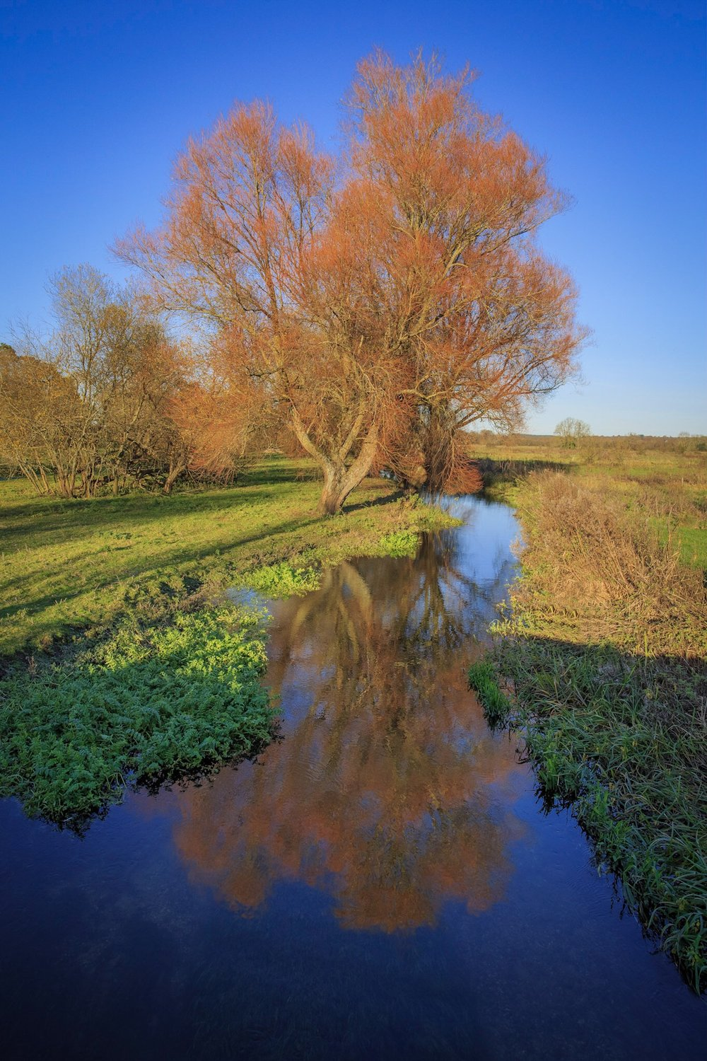 Winter colours by Rick McEvoy Hampshire Photographer