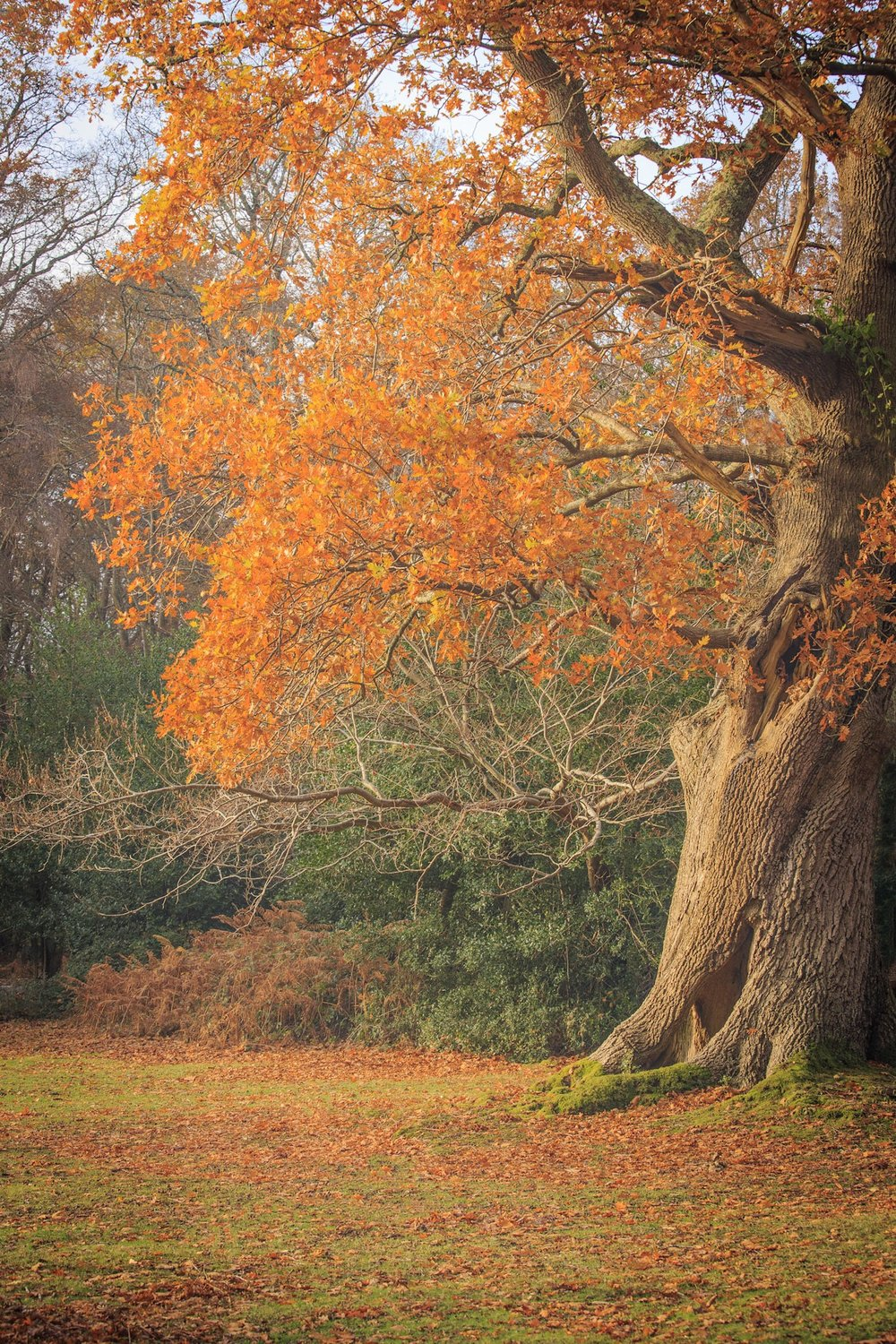 Autumn colours by Hampshire Photographer Rick McEvoy